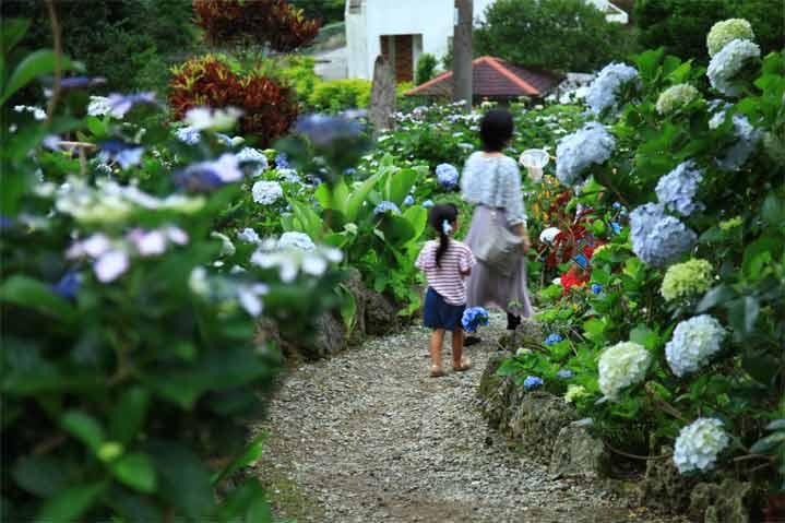 沖繩祭典、活動-饒平名繡球花園