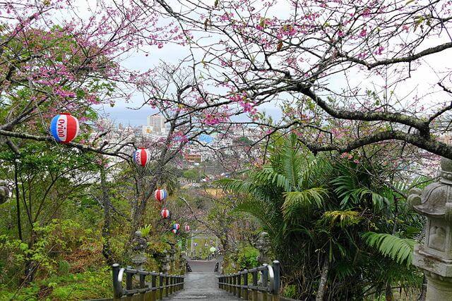 沖繩祭典、活動-名護櫻花祭