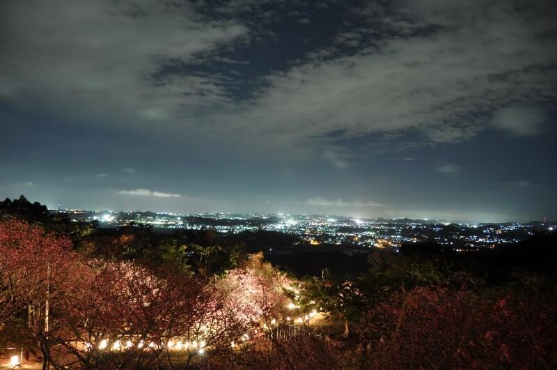 沖繩祭典、活動-八重瀨櫻花祭