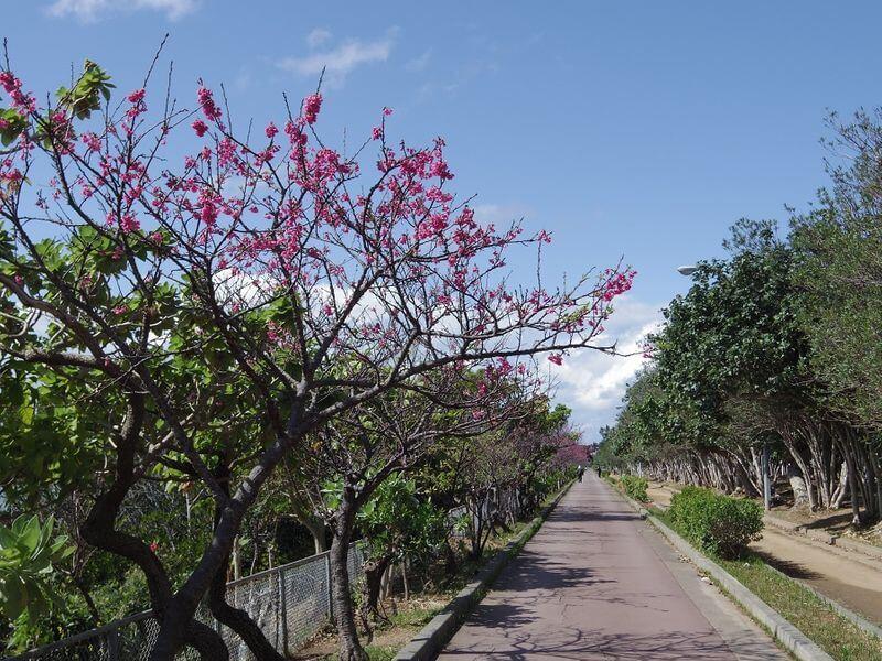 沖繩祭典、活動-那霸美麗櫻花祭