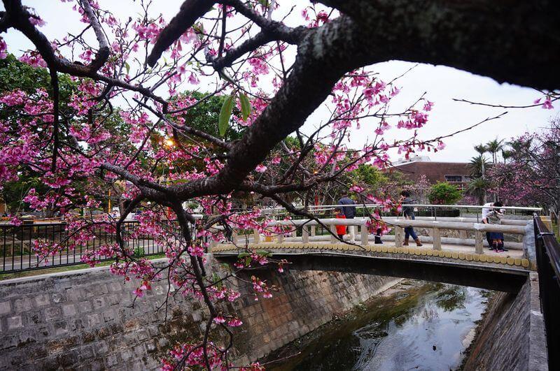 沖繩祭典、活動-那霸櫻花祭