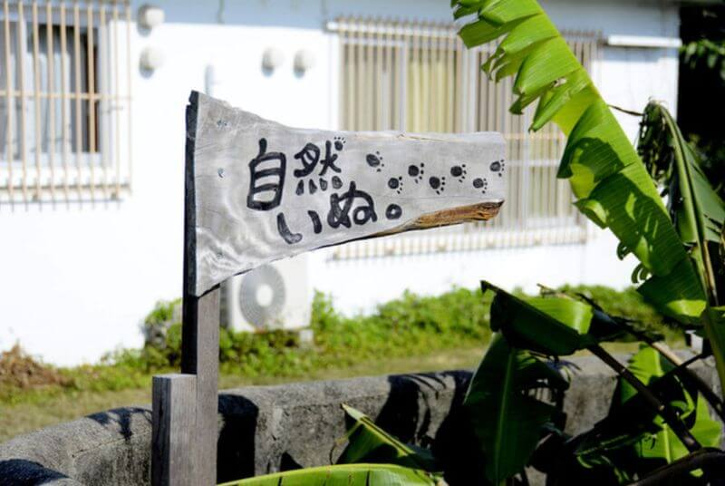 沖繩素食餐廳-中部-自然いぬ。/ We are Vegan