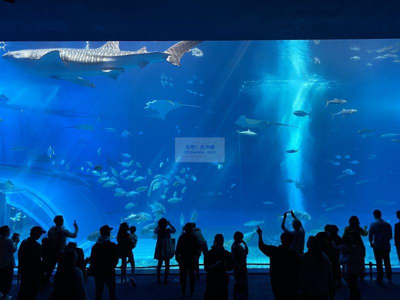 沖繩行程分享-沖繩美麗海水族館-黑潮之海